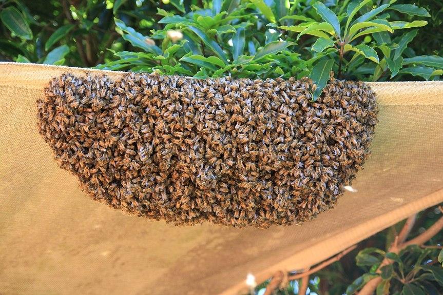 Bluff Beekeepers Calendar:April